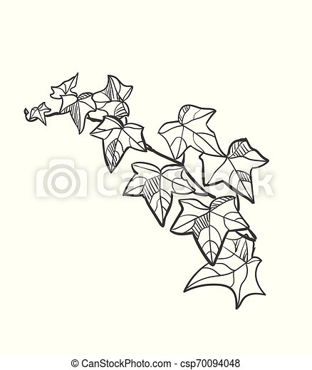 vector sketch illustration design elements plant ivy - csp70094048
