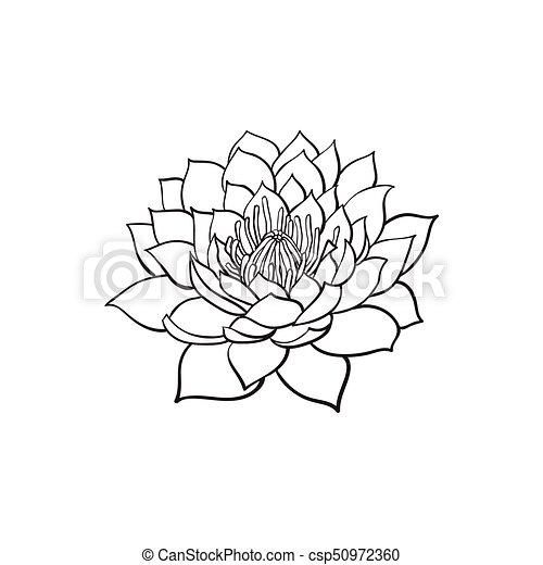 Lotus Flower Blooming Drawing