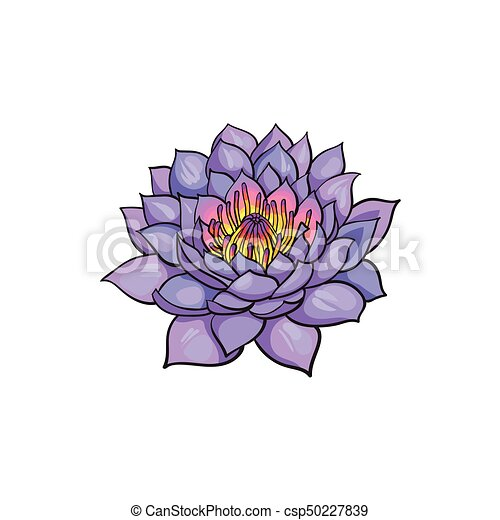 Vector Sketch Lotus Flower Blossom Blooming Vector Sketch Cartoon
