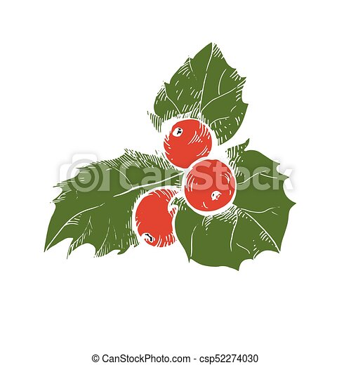 vector sketch of christmas holly berry christmas symbol vectors rh canstockphoto co uk Holly Berry Clip Art Black and White Holly Berry Clip Art Black and White
