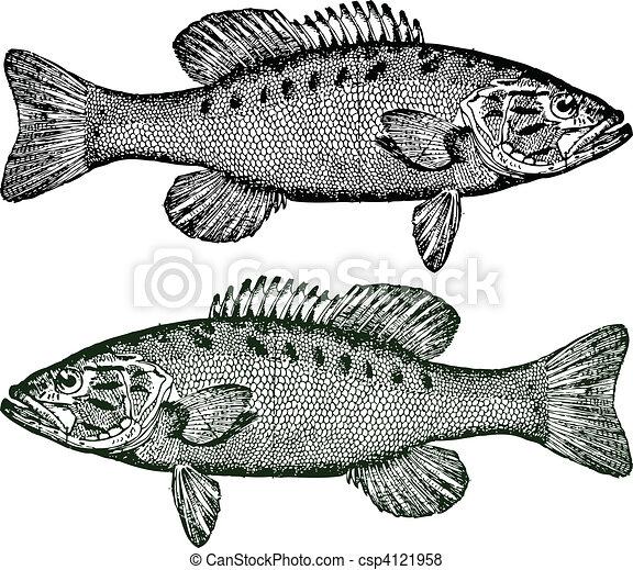 Vector Smallmouth Bass Illustration Of