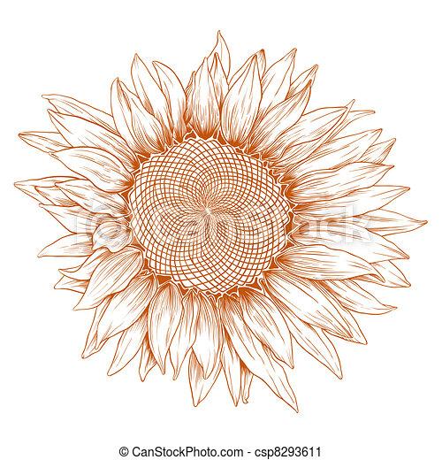 Vector sunflower. - csp8293611