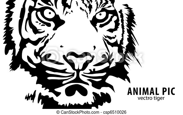 Line Drawing Of A Tiger S Face : Tigers clipart and stock illustrations vector eps