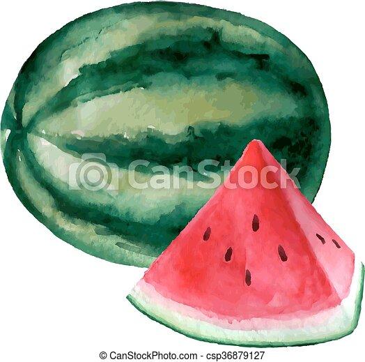 Vector watercolor hand drawn watermelon illustration.  - csp36879127