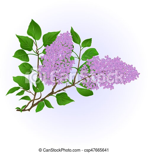 dessiner fleurs naturel lilas vendange vecteur eps rechercher des clip art. Black Bedroom Furniture Sets. Home Design Ideas