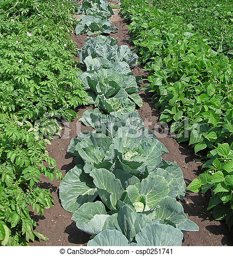 Vegetable Garden - csp0251741