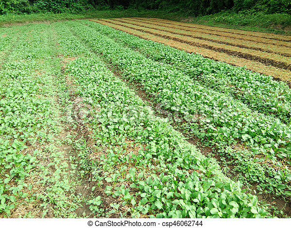 Vegetable garden - csp46062744