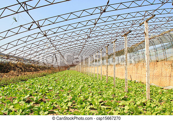 vegetable greenhouse interior landscape - csp15667270