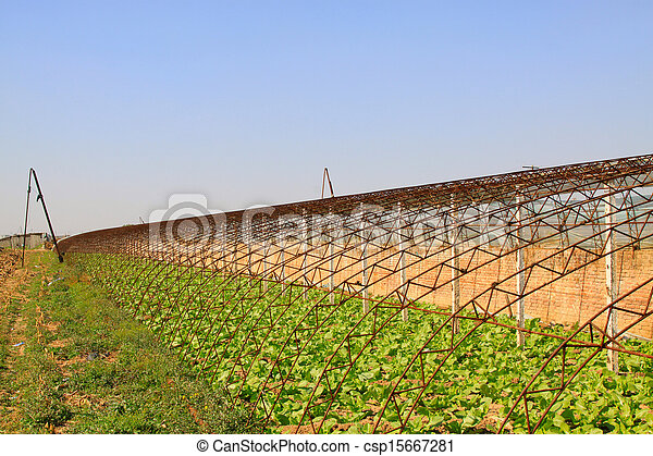 vegetable greenhouse interior landscape - csp15667281