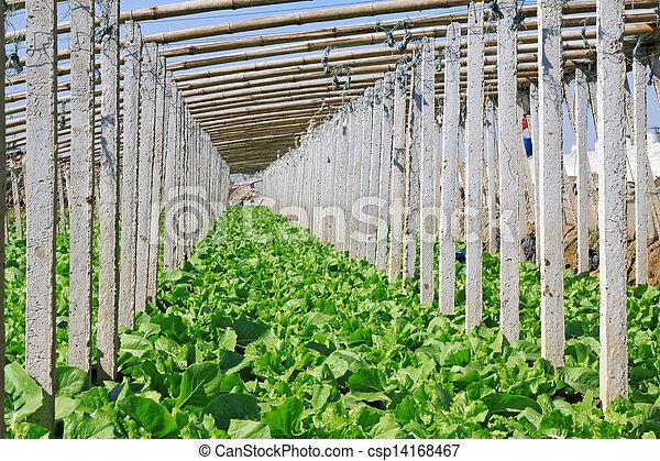 vegetable greenhouse interior landscape - csp14168467