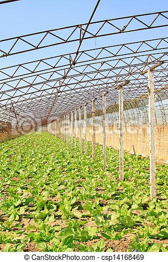 vegetable greenhouse interior landscape - csp14168469