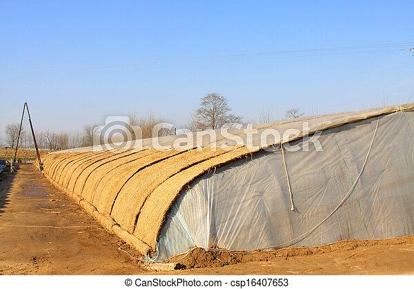 vegetable greenhouse - csp16407653