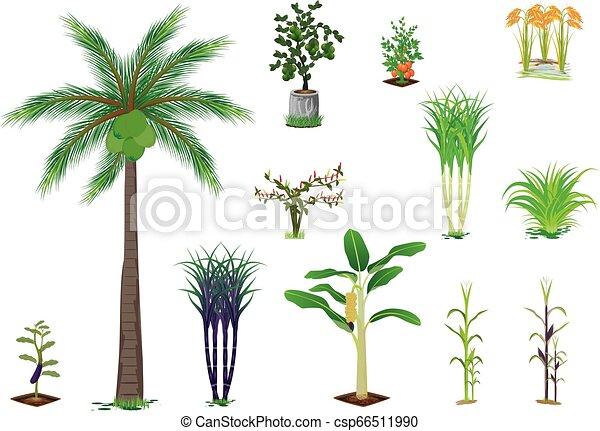 vegetable plant on white background - csp66511990