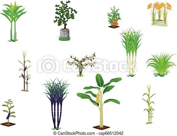 vegetable plant on white background - csp66512042