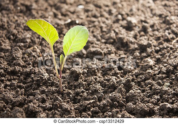 vegetables growing out of soil - csp13312429