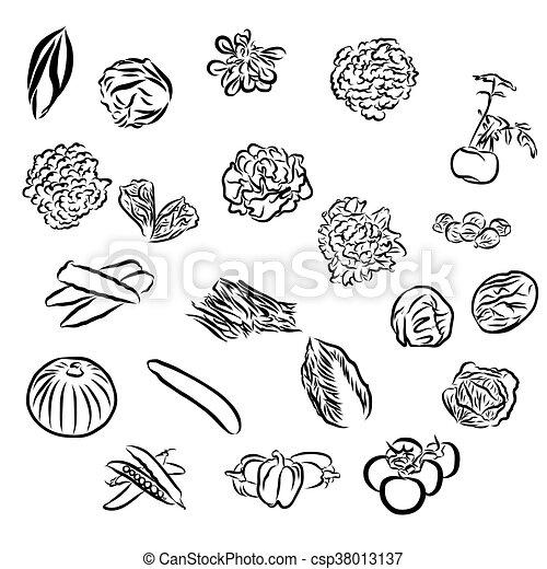 vegetables Sketch Outline Vector Artwork - csp38013137