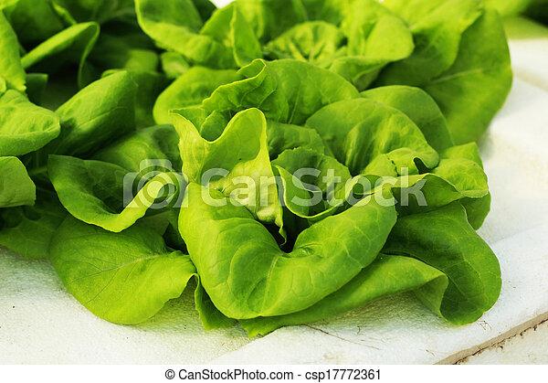 vegetal, farm., ensalada verde, hydroponic - csp17772361