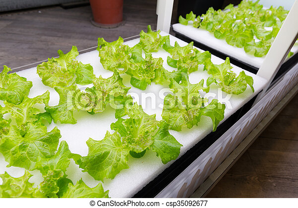 vegetal, hydroponics, fazenda - csp35092677