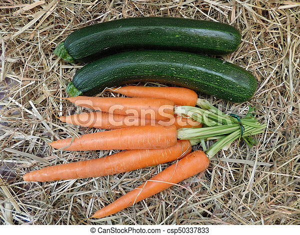 Verduras - csp50337833