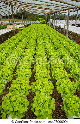 Verduras orgánicas - csp27006994