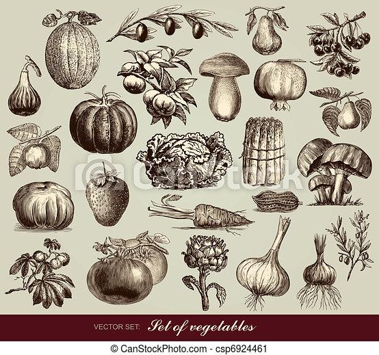 vegetales, vector, conjunto - csp6924461