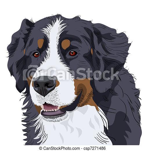 vektor, berg, rasse, berner senn hund - csp7271486