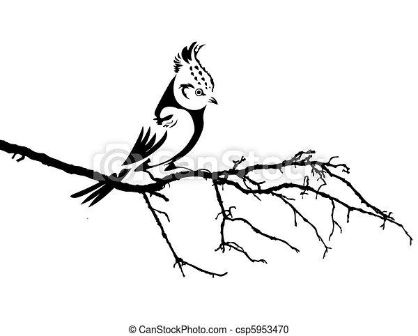 vektor, silhuet, fugl, branch - csp5953470