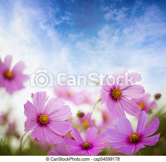 veldbloemen - csp54599178