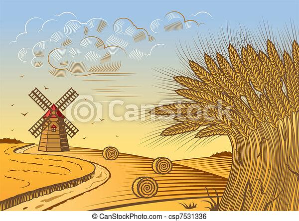 velden, tarwe, landscape - csp7531336
