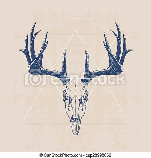 Venado, cráneo. Dibujado, cráneo, venado, ilustración, mano.