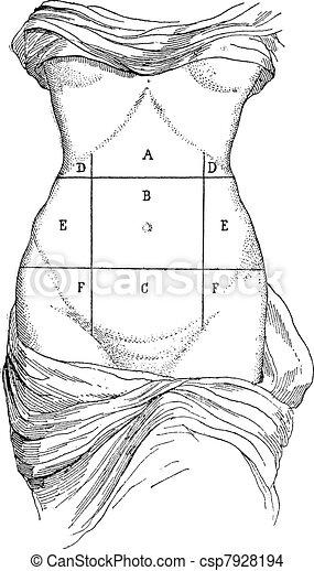 Resultado de imagen de abdomen en el arte