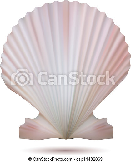 Scallop Seashell - csp14482063