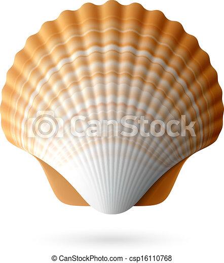 Scallop Seashell - csp16110768