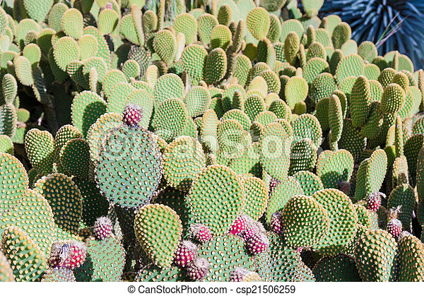 verão, árvore cactus - csp21506259