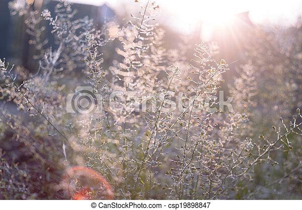 verão, abstratos, fundo - csp19898847