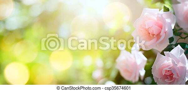 verão, arte, primavera, abstratos, fundo, floral, ou - csp35674601