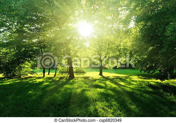 verão, floresta, árvores - csp6820349
