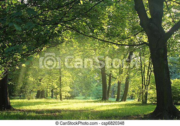 verão, floresta, árvores - csp6820348