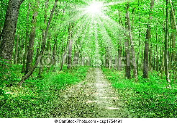 verão, natureza - csp1754491