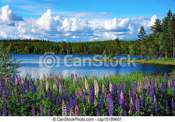 verão, paisagem, escandinavo - csp10189601