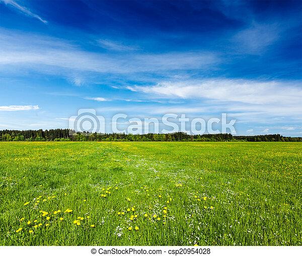 verão, prado - csp20954028