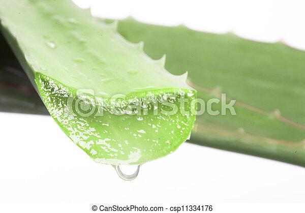 vera, áloe, hojas, aislado, agua, plano de fondo, blanco, gotas - csp11334176