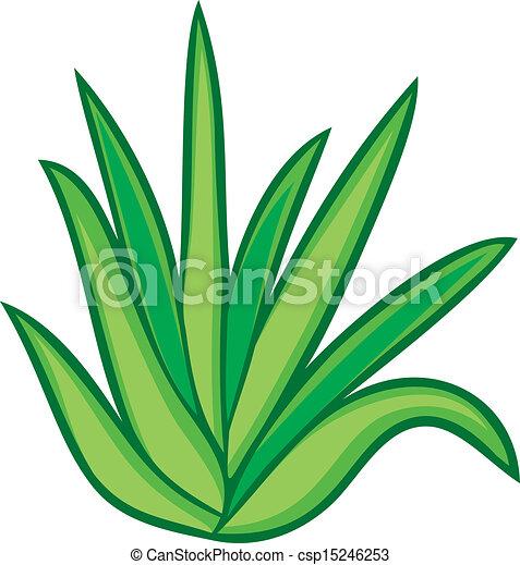 Aloes Ilustracje I Kliparty 6 090 Aloes Ilustracje Royalty