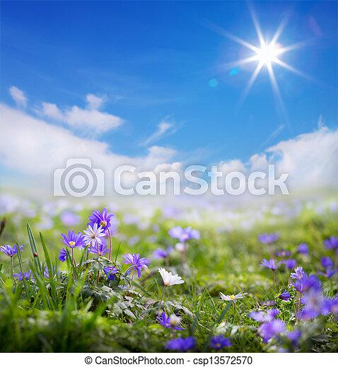 verano, arte, primavera, plano de fondo, floral, o - csp13572570