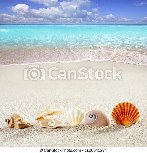 verano, cáscara, vacaciones, perla, almeja, plano de fondo, playa - csp6645271