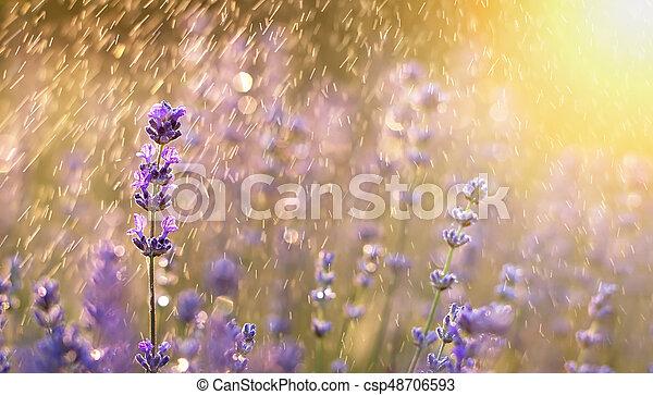 Estandarte floral de verano - csp48706593