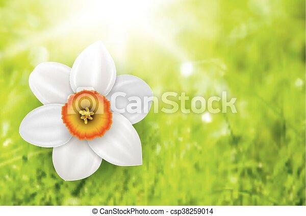 Trasfondo de flores de verano - csp38259014
