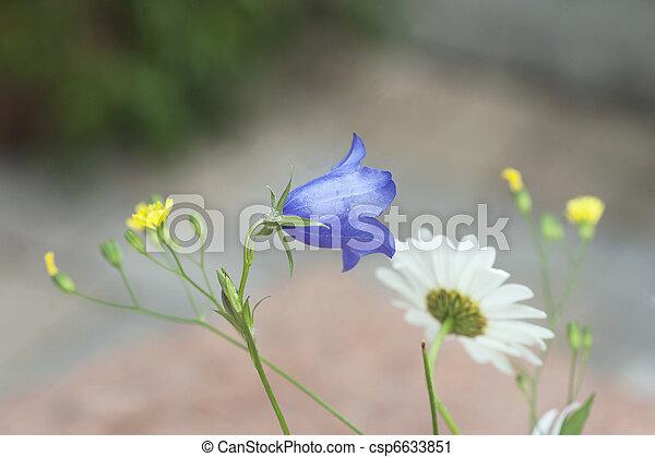 Flores de verano - csp6633851