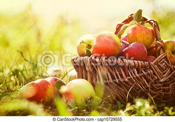 Manzanas orgánicas en la hierba de verano - csp10729555