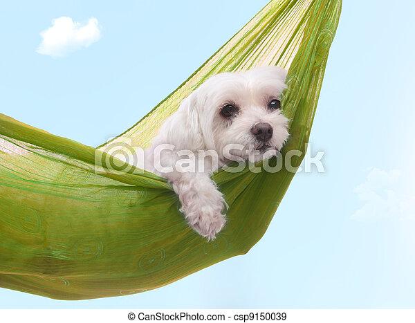 verano, perezoso, perro, dazy, días - csp9150039